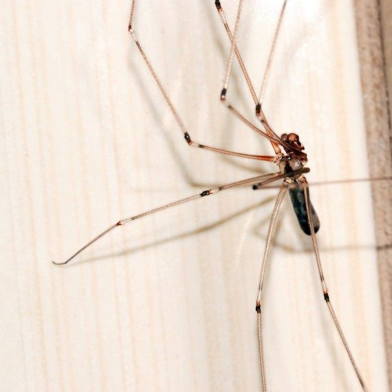 Spiders, Pest Control in Addlestone, New Haw, Woodham, KT15. Call Now! 020 8166 9746